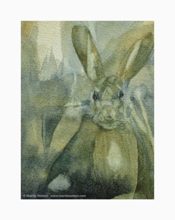 128 Hare by Marnie Watson