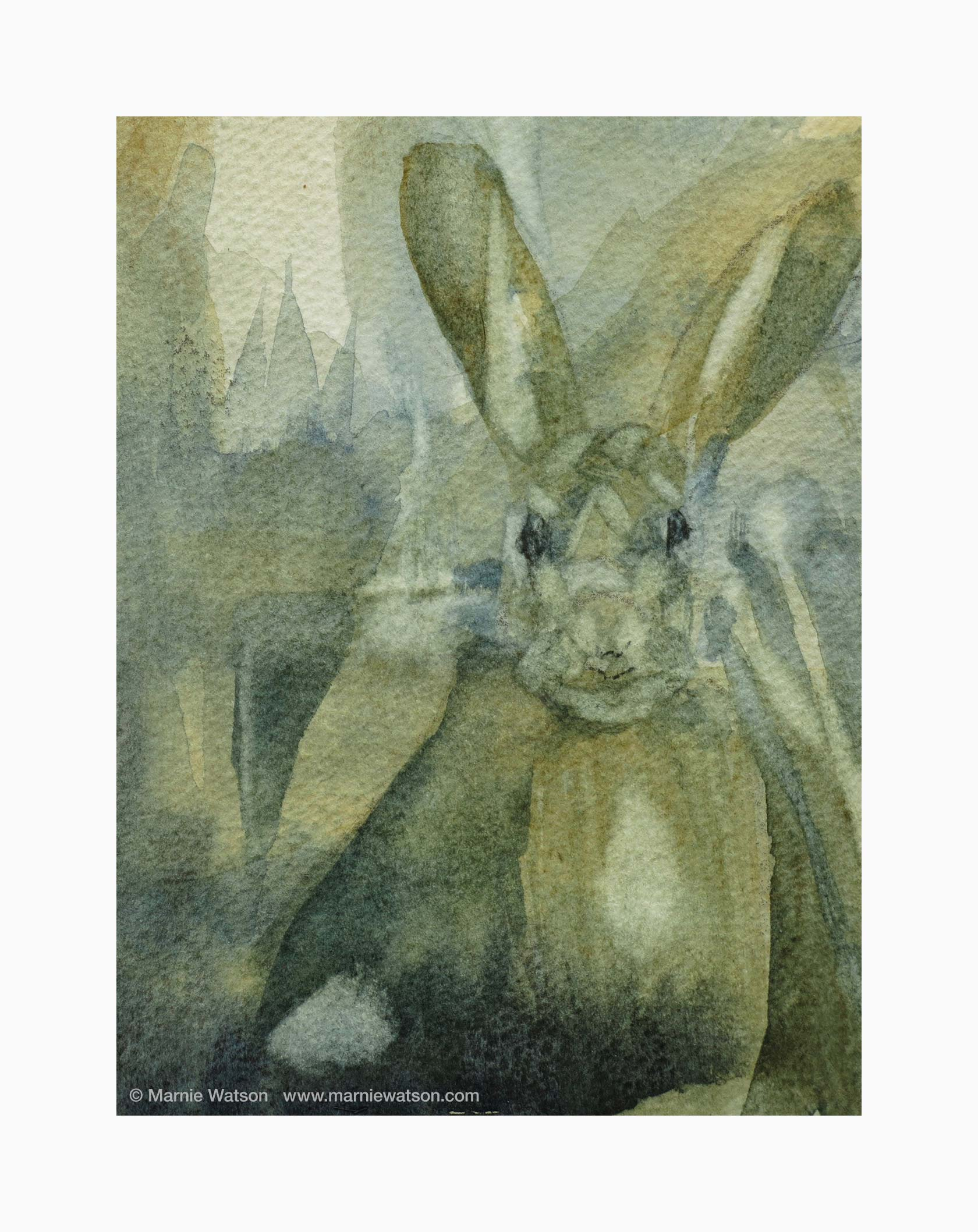 128 Hare by Marnie Watson