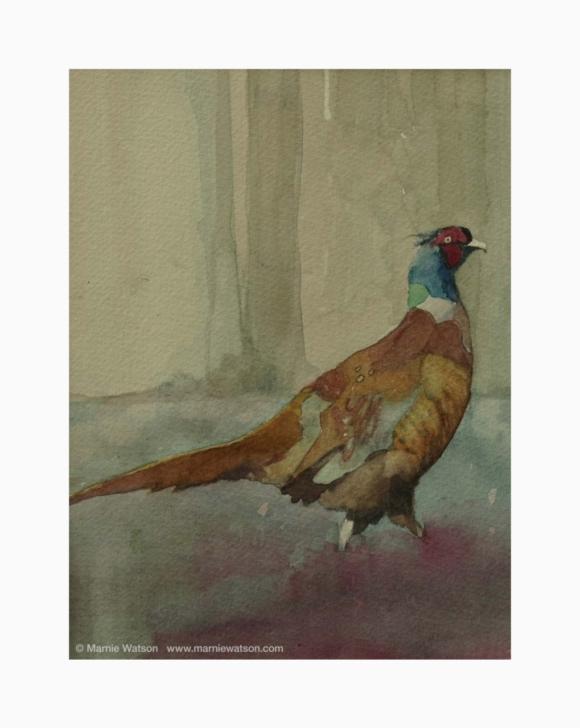 134 Pheasant by Marnie Watson